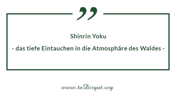 Shinrin-Yoku - das tiefe Eintauchen in die Atmosphäre des Waldes