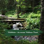 Waldbaden – der neueste Wellness-Trend